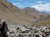 Récit trek Ladakh