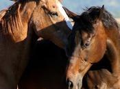 rêve chevaux, donc…