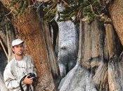 coeur arbres, secret écorces