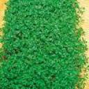 Langage vert