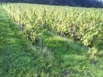 lièvre gris vin, fable Baraou.
