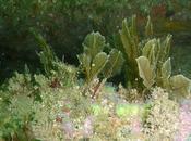 plumes sous l'océan