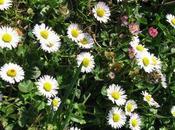 Printemps gersois fleuri