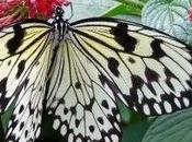 Certains papillons vivent qu'une journée général s'agit pour plus beau jour leur vie... (Philippe Geluck)