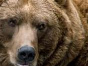 images grizzli témoin mariage maître