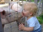 Grippe porcine patient zéro identifié