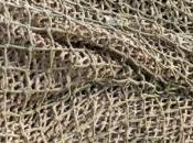 déclin poissons d'eau douce aurait forcé ancêtres pêcher