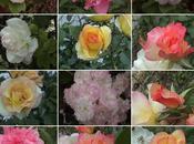 fleurs pour oublier pluie