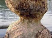 Anatomie ouache
