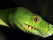 photo mois Juin 2009 Python Vert