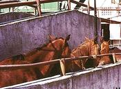 pitié pour chevaux