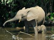 guerre hors limites qu'ont découvert américains tâtant l'éléphant