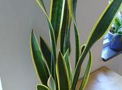 Déco nature quelles plantes choisir pour parfaire décoration d'intérieur écolo