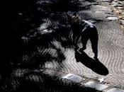 Jardins ombres