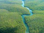 Déforestation Amazonie c'est comme crise, vient