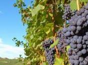 Réchauffement climatique alerte rouge pour vins