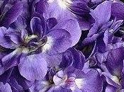 Oui...Violette !!!!