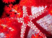 étoiles (Bernard Dimey)