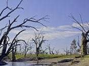 Australie,les premiers symptomes rechauffement climatique
