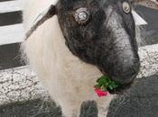 moutons vendéens Pierre Augustin Marboeuf envahissent Nantes