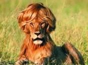 Cheveux raplapla