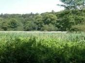 marais Stors classé Réserve Naturelle Régionale
