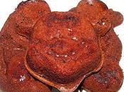 Mickey, donald plutot chocolats