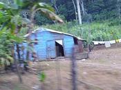 Scènes dans campagne dominicaine