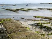 Photo lundi novembre 2009 huîtres l'île Sein