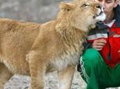 Lion Affectueux photos)