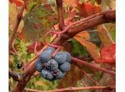 vignoble s'arrache terre oublie histoire