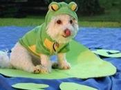 chiens dans costumes amusants photos)