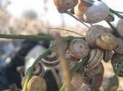 escargots leur recette quelques conseils sante