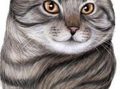 Portrait animalier chat européen