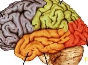 Temps cerveau disponible