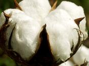 semaine développement durable infos COTON