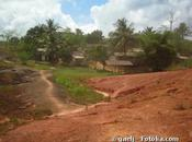 Action Amazonie razzia forêt tropicale