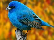 Ressembler l'oiseau (Luc Bérimont)