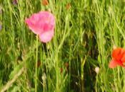 fleurs sauvages pour ABOU OUSMANE