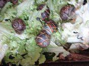 mange quoi demain? escargots