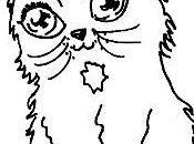 Sassa, mignon petit chat