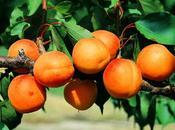 plantes aphrodisiaques leurs légendes