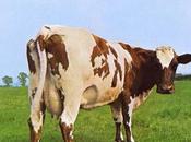 Pink Floyd #2-Atom Heart Mother-1970