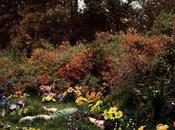 Fury Flowers Worms, Anne Sexton. flowers...