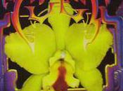 """""""Wild Flower"""" Cult"""