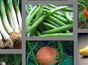 Vive légumes