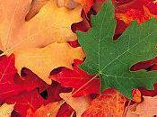 Préparer l'automne beauté