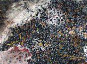 Lisson: vendanges 2010/4- premiers raisins commencent leur fermentation