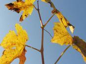 feuilles mortes (Jacques Prévert)