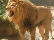 chasse lions (Alphonse Allais)
